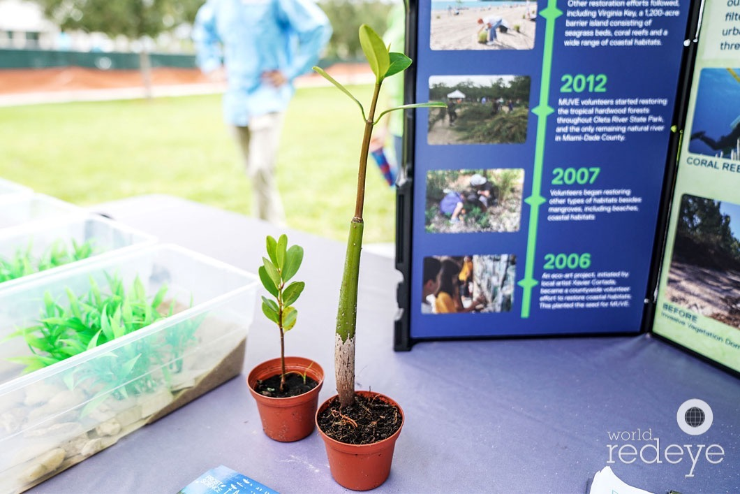 World Ocean's Day at Phillip & Patricia Frost Museum of Science